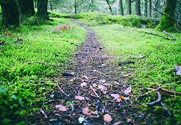 terrain - Le Domaine des Fontenelles - CHAVAGNE